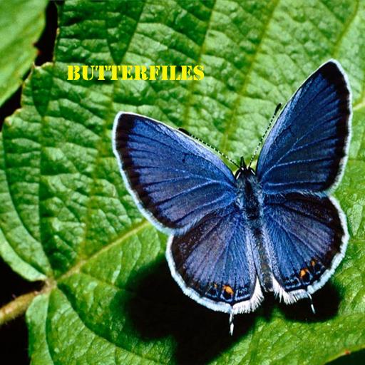 Butterflies for iPhone